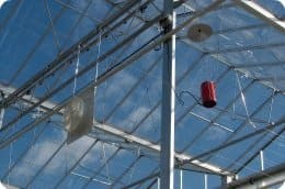 ventilator in greenhouse