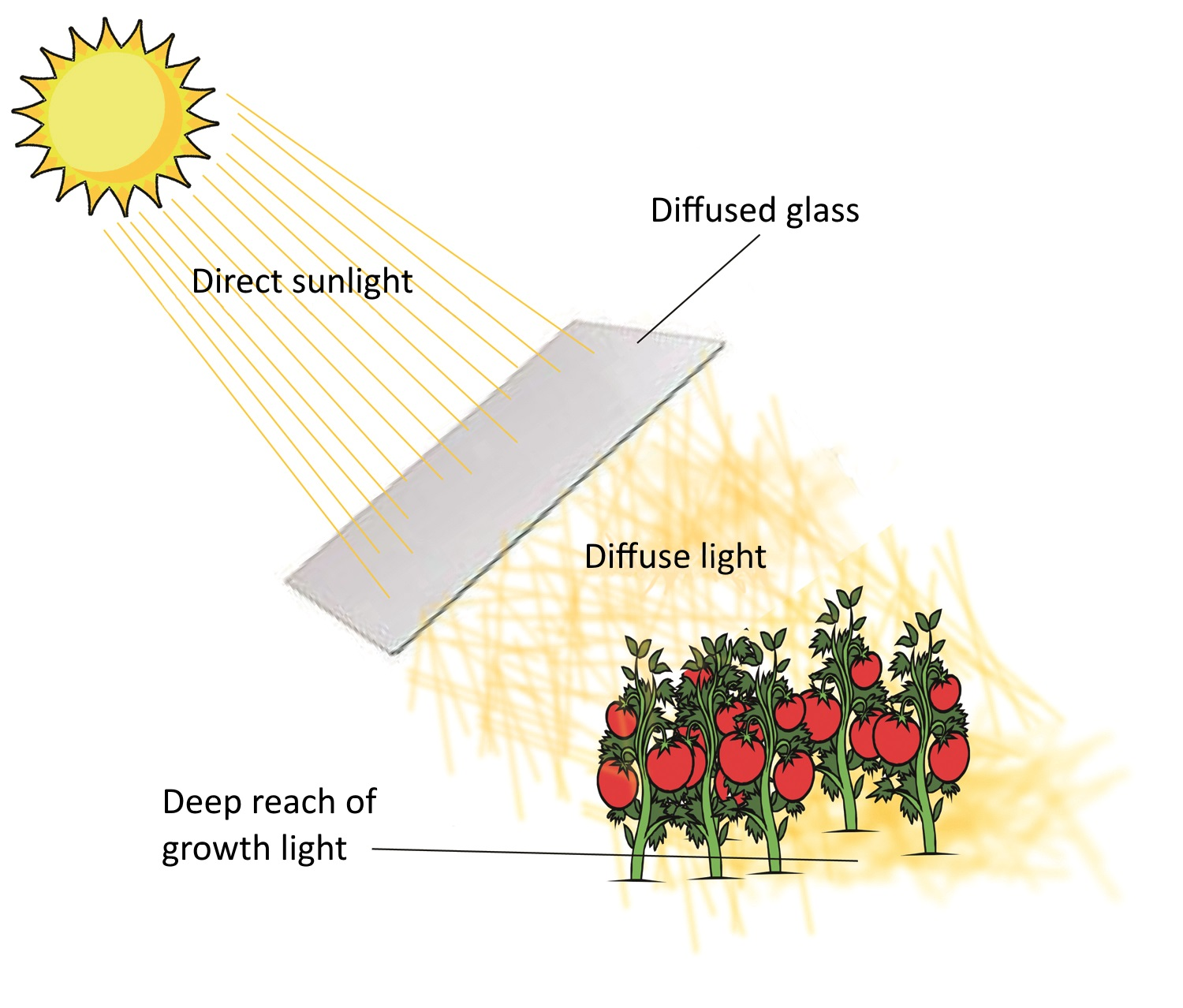 Functioning of diffuse light