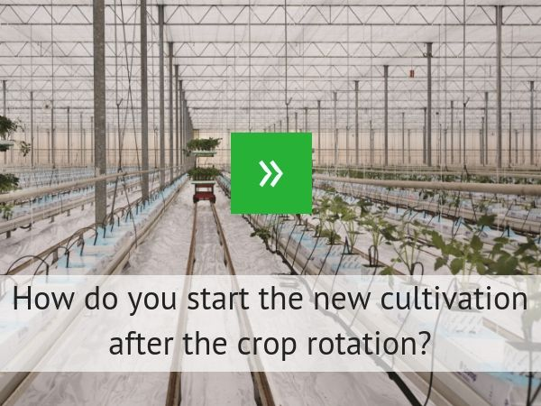 How do you start your new crop after crop rotation?