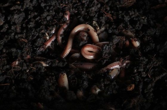 soil structure improvement with worms