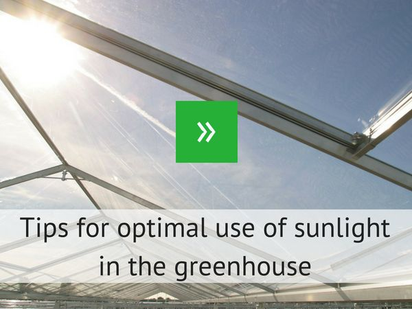 Tips for optimal use of sunlight in the greenhouse
