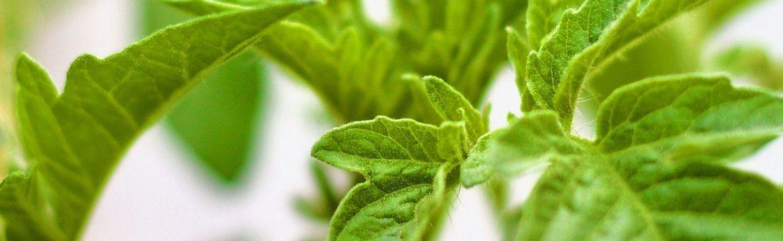 Foliar fertilizing