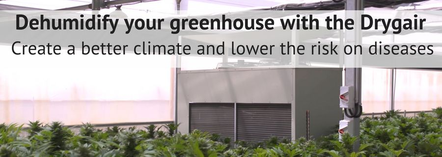 optimal climate in cannabis cultivation