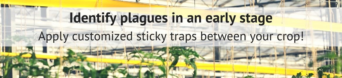 Sticky Traps personal advice
