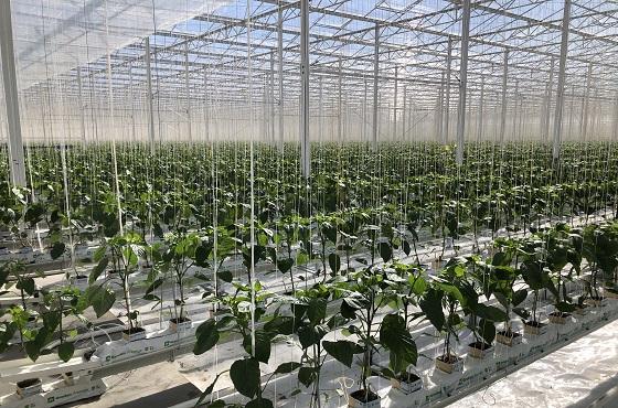 canada horticulture greenhouse