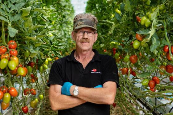 Tomato grower
