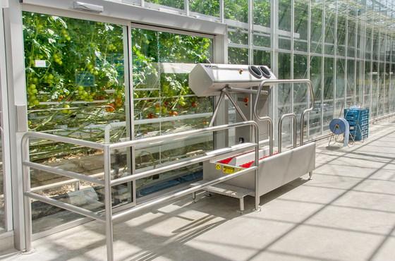 Hygiene station in tomato greenhouse