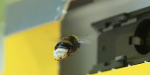 How to treat a bumblebee sting