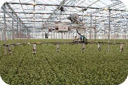 The use of chemical pesticides within the greenhouse