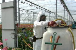 Which personal protective equipment do you need to wear when working with crop protection?