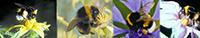 Bumblebee Hives