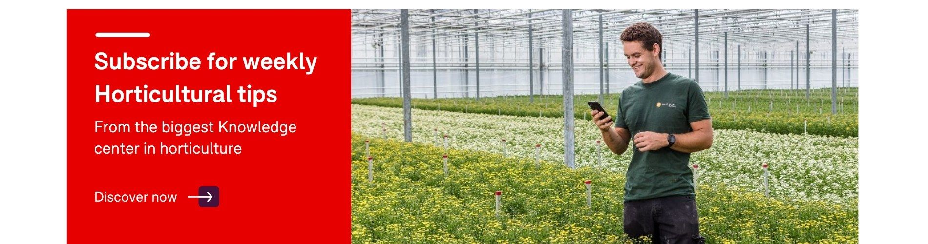 new products 05371 367cc Royal Brinkman  Global specialist in horticulture