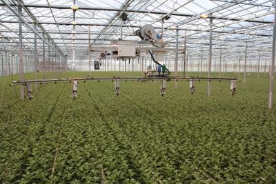 MONcontrol Chrysanthemum [250.000/5L. bag] (AB1)