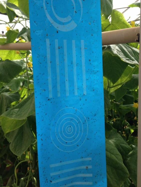 Optiroll Super Plus Blue 100m x 30cm - T1