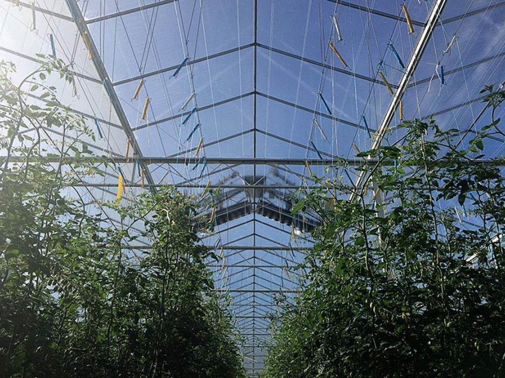 Greenhouse roof cleaner