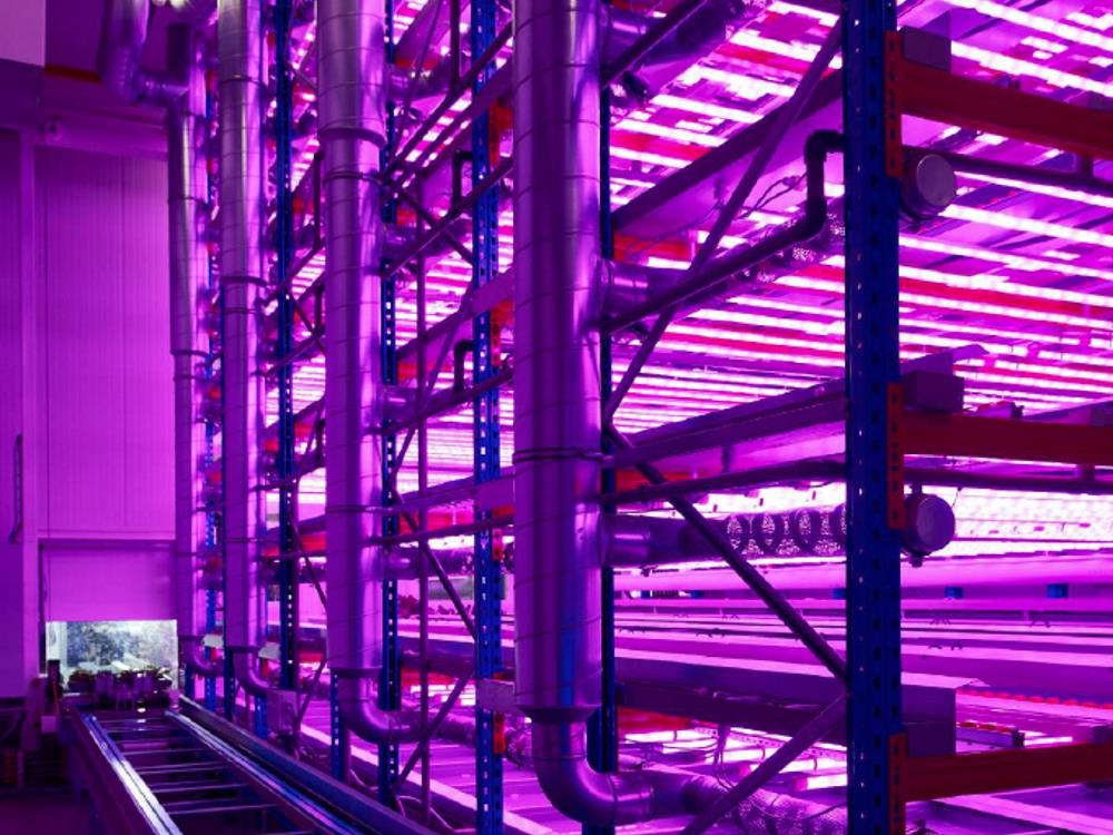 PlantFactory tailor-made vertical farming solution