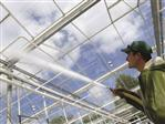 How do you use glass cleaner in a greenhouse?